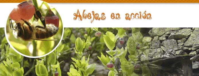 ABEJAS_EN_ACCION_FAPAS_blog_Esteban_Capdevila