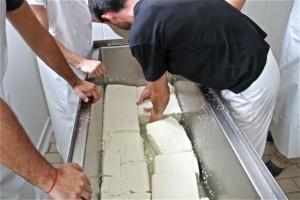 Cortando bloques de queso para desuerarlo. Blog Esteban Capdevila