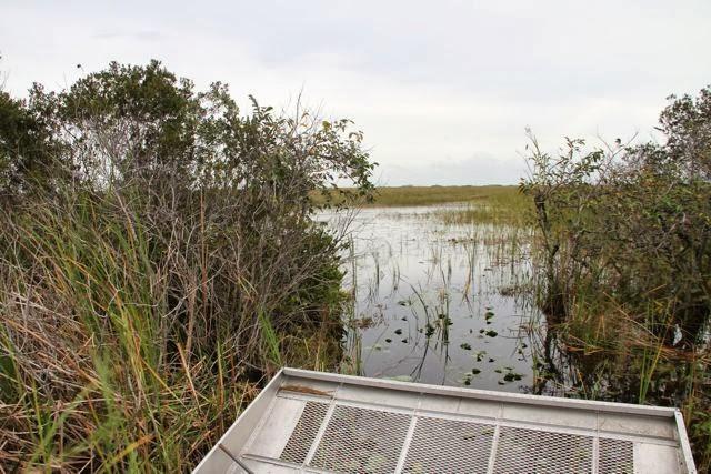 Aerodeslizador en los Everglades. Blog Esteban Capdevila