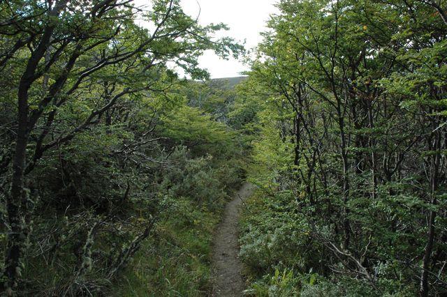 bosque de sierra toro. blog esteban capdevila