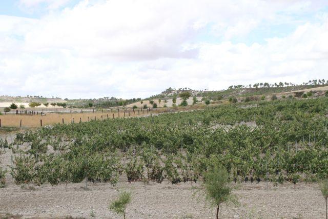 PAISAJE-DE-CIGALES-BLOG-ESTEBAN-CAPDEVILA