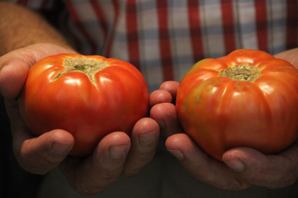 tomate de Mansilla en CASA MANDO