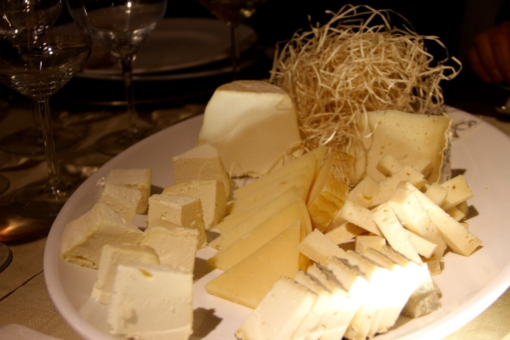 quesos cultivo - 1