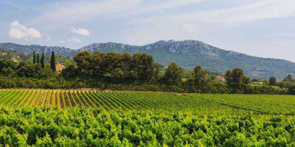 ott_chateau_romassan_vineyardc_herve_fabre_lowres